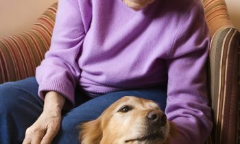 One Family's Story of Senior Care in Pineville, NC: Considerations for a Large Dog