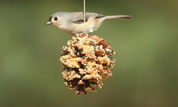 Attracting Birds to Dad's Yard