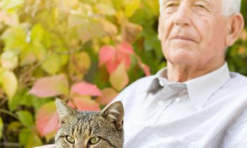 Tips for Giving Your Parent the Benefits of Pet Ownership during Adopt-a-Cat Month
